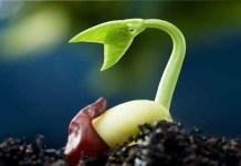 semillas que germinan rápido