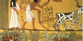 cómo surgió la agricultura y la ganadería