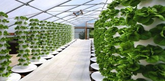 cultivo hidropónico casero 1