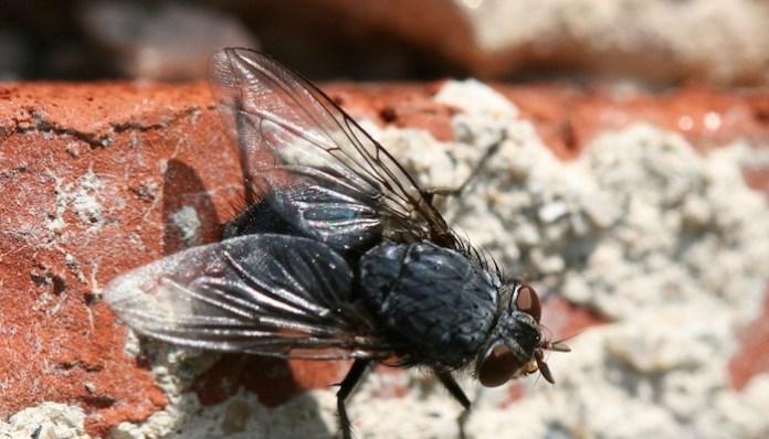 producto ideal para repeler a las moscas