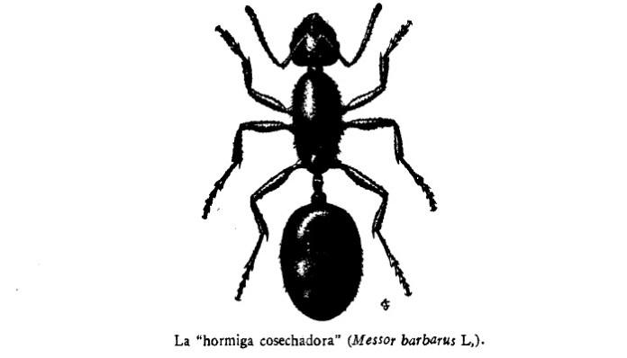 Los tipos de hormigas en España