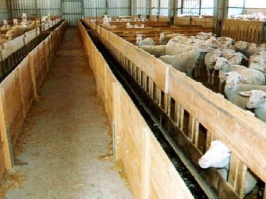 comederos de madera para ovejas