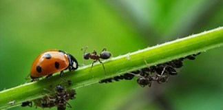 como eliminar las plagas de las plantas de forma natural