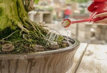 abono organico solido para bonsai