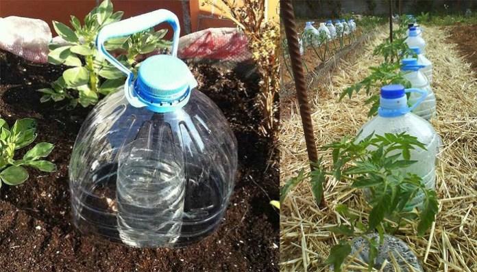 botellas para regar agua en una huerta