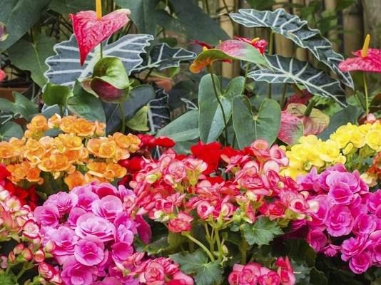 plantas que florecen en invierno