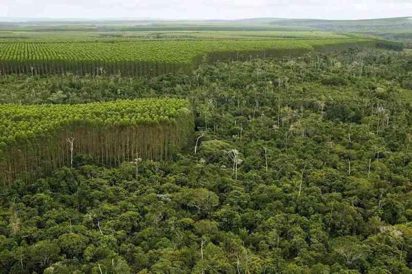 O que é inventario florestal
