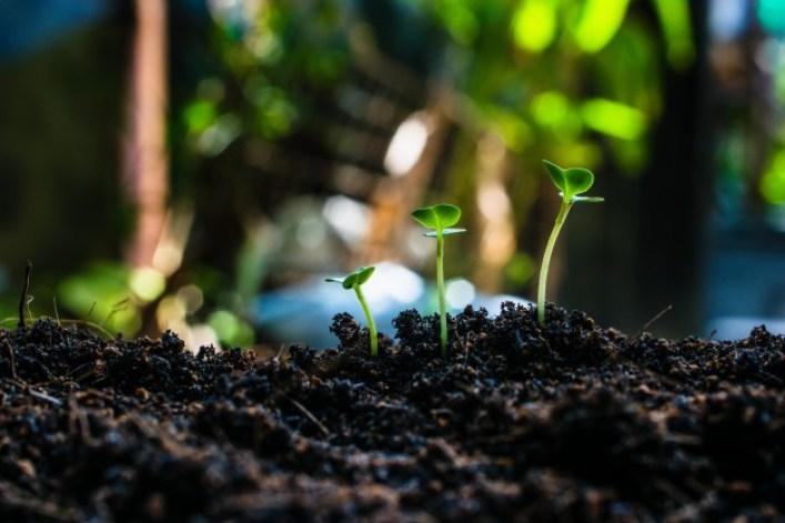 Solo fértil e a sua importância para a agricultura!