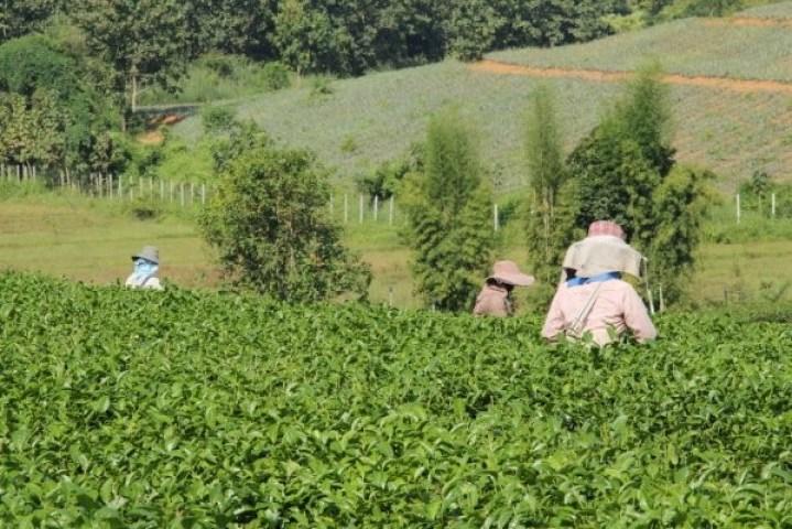 Agricultores em suas plantações