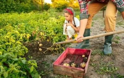 Agricultura familiar: o que você sabe sobre esse assunto?