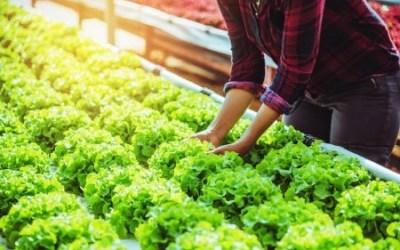 Agricultura sustentável: aprenda a fazer!