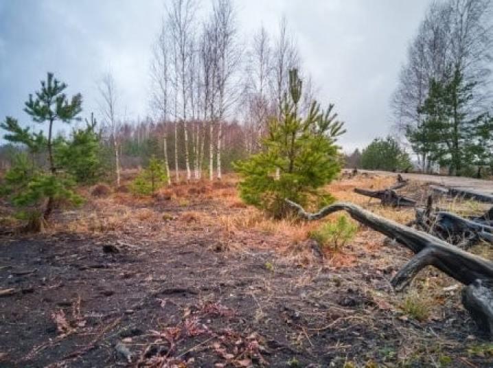 Queimadas e derrubadas causam desmatamento