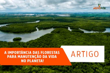 A Importância das Florestas para Manutenção da Vida no Planeta!