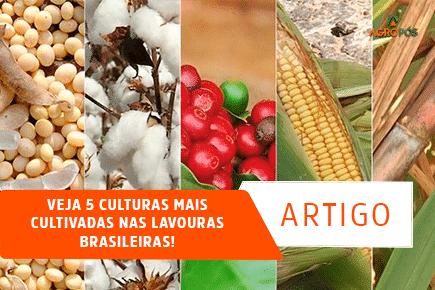 Veja 5 Culturas mais Cultivadas nas Lavouras Brasileiras!