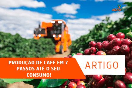 Produção de café em 7 passos até o seu consumo!