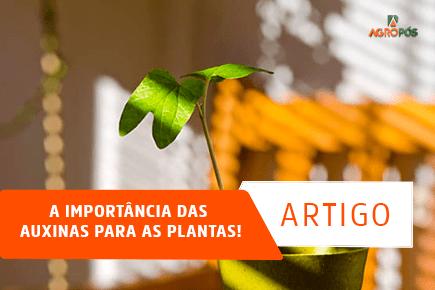 A Importância das Auxinas para as plantas!