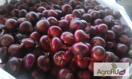 Фото к объявлению: продаем свежие овощи и фрукты из Египта ...