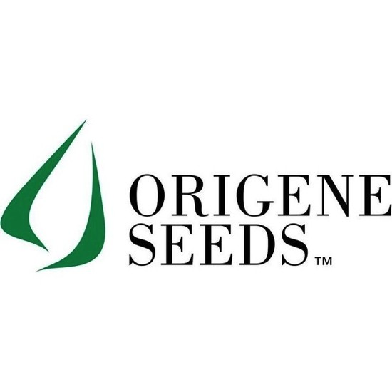 Origine Seeds logo