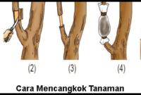 5 Cara Stek Pohon Asam Jawa