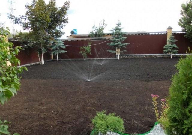 Полив газона после посева травы