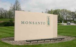 monsanto-cartel saint louis w