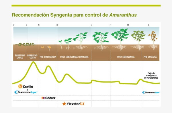syngenta-amarantussoja2