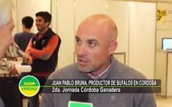 Bufalos-JuanPabloBruna w