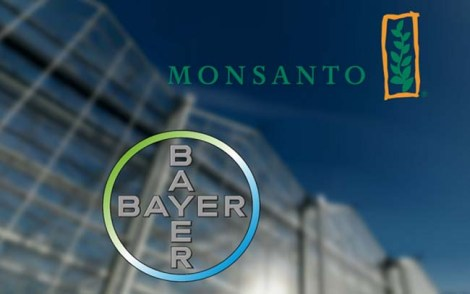 Bayer-Monsanto w