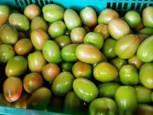 Tomates bugalú