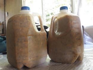 Pulpa de chinolas por galón