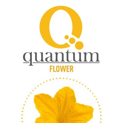 QUANTUM FLOWER