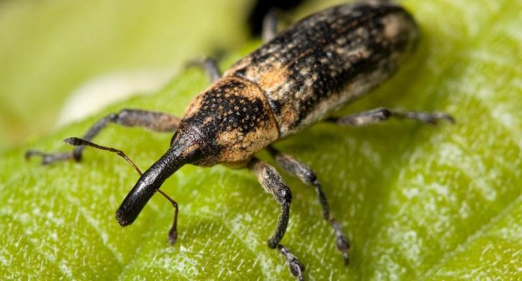 Manejo integral de plagas en ambientes protegidos