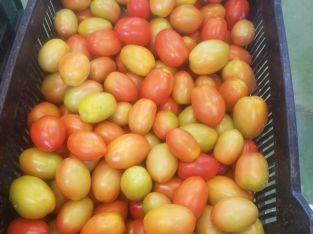 Caja tomates bugalú