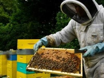 Francia prohíbe los pesticidas letales para las abejas