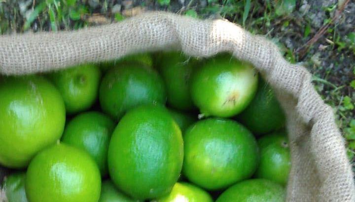 Compramos limón persa