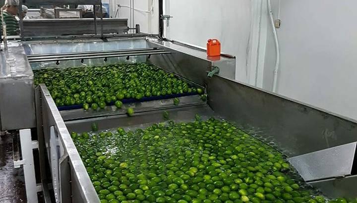 limon tahiti o persa