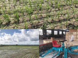 Sembradora/Transplantadora de arroz
