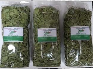 Stevia Dominicana