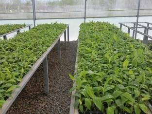 Germinación de plantas