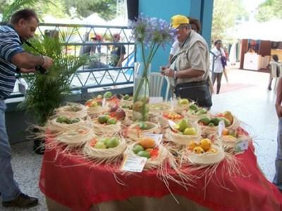 República Dominicana: La producción de mango crece entre un 10 y un 15%