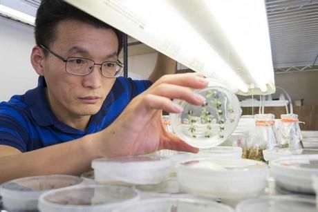 """Un científico trabajará en equipo para desarrollar cítricos tolerantes al """"citrus greening"""""""