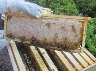 Vendemos panales de miel