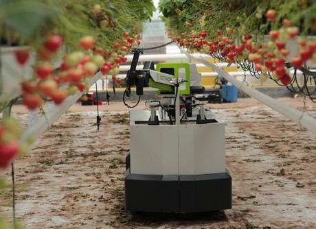 Tom Coen de Octinion ha presentado el robot recolector de fresas Rubion en Fruit Logistica:
