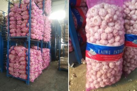 """""""El precio de exportación del ajo chino continúa bajando"""""""