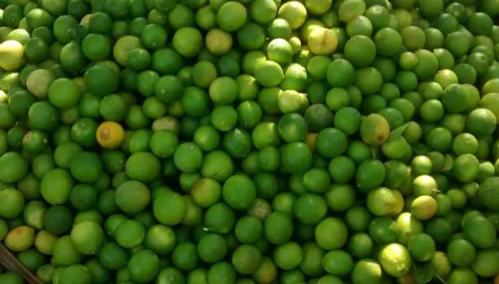 Vendo 100 qq de limón