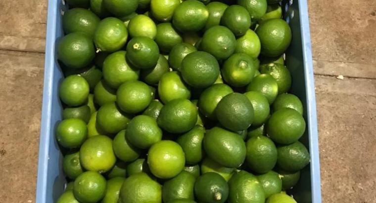 Limón persa importado