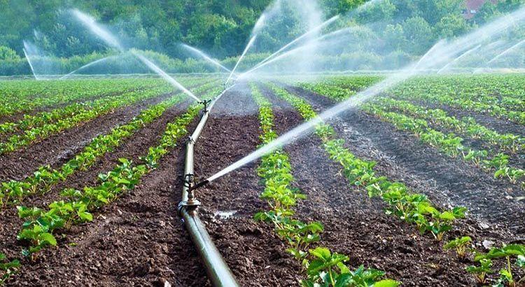 ¿Por qué el agua que utilizas para el riego puede afectar el pH del sustrato?