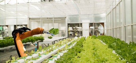 En los Estados Unidos ya están a la venta las primeras hortalizas procedentes de huertos robóticos