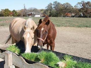 Forraje para caballos
