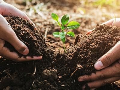 Científicos diseñan un biofertilizante que protege el suelo del cultivo de tomate en invernaderos